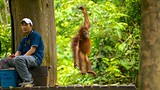 Sepilok Orang Utan Sanctuary - Sandakan - Tourism Media