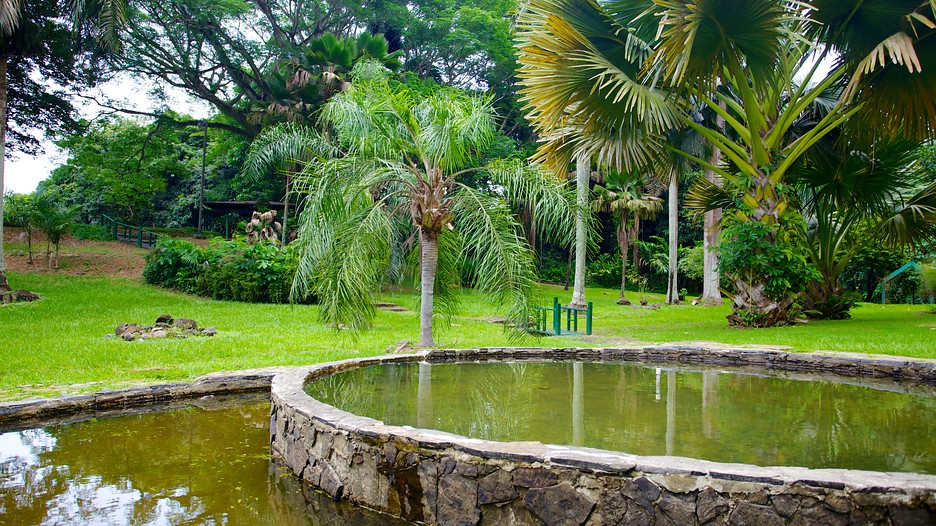 Jardin botanico in san juan expedia for Botanico jardin