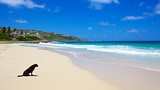 Guana Bay Beach - Sint Maarten (Dutch) - Tourism Media