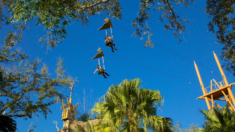 Busch gardens in tampa florida expedia for Busch gardens vacation packages