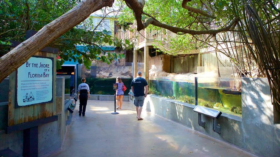 Florida Aquarium In Tampa Florida Expedia