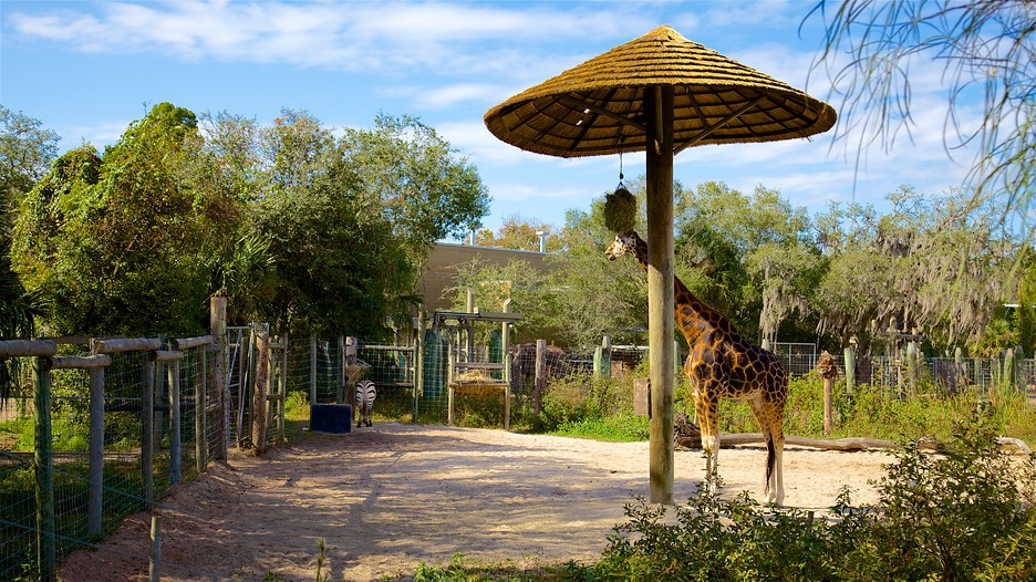 Lowry Park Zoo In Tampa Florida Expedia