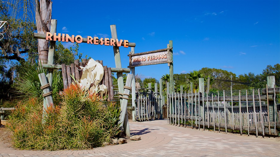Lowry Park Zoo Christmas 2020 Lowry Park Zoo Tampa Christmas 2020 Florida | Rbyqxd.mosnewyear.site