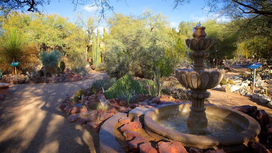 Tucson Botanical Gardens   Tucson   Tourism Media ...