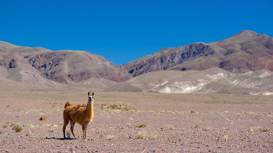 Northern Chile Vacations 2017 Explore Cheap Vacation Packages Expedia