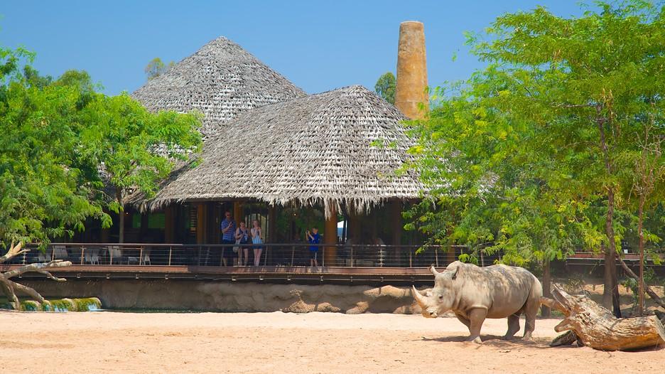 Bioparc Valencia Zoo in Valencia,  Expedia.ca