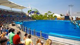 The Oceanografic Aquarium - Valencia - Tourism Media