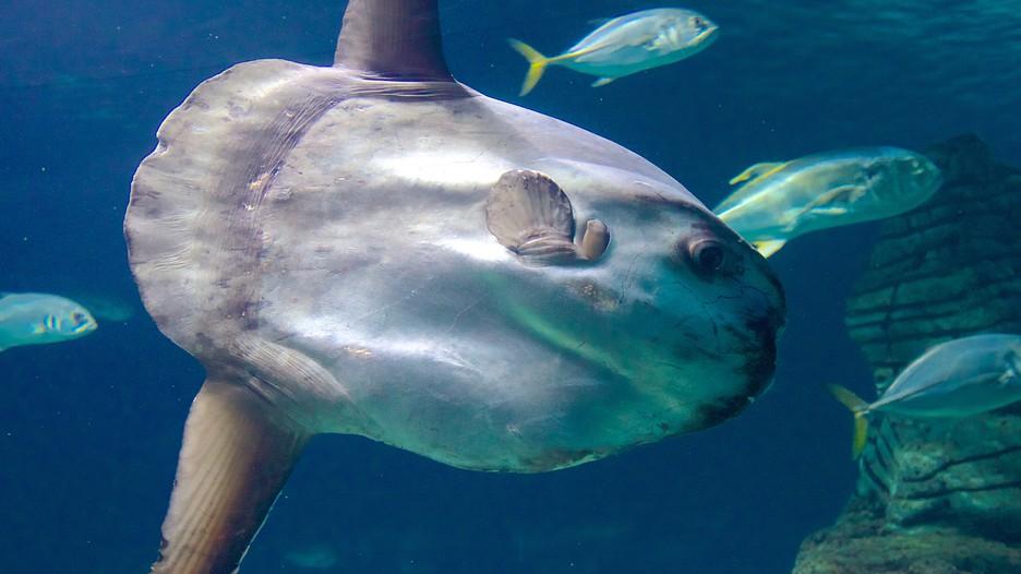 The Oceanografic Aquarium - Valencia - Tourism Media
