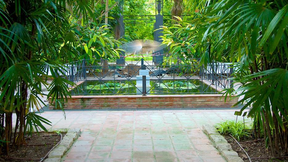 Jard n bot nico de valencia puntos de inter s en - Jardin botanico valencia ...