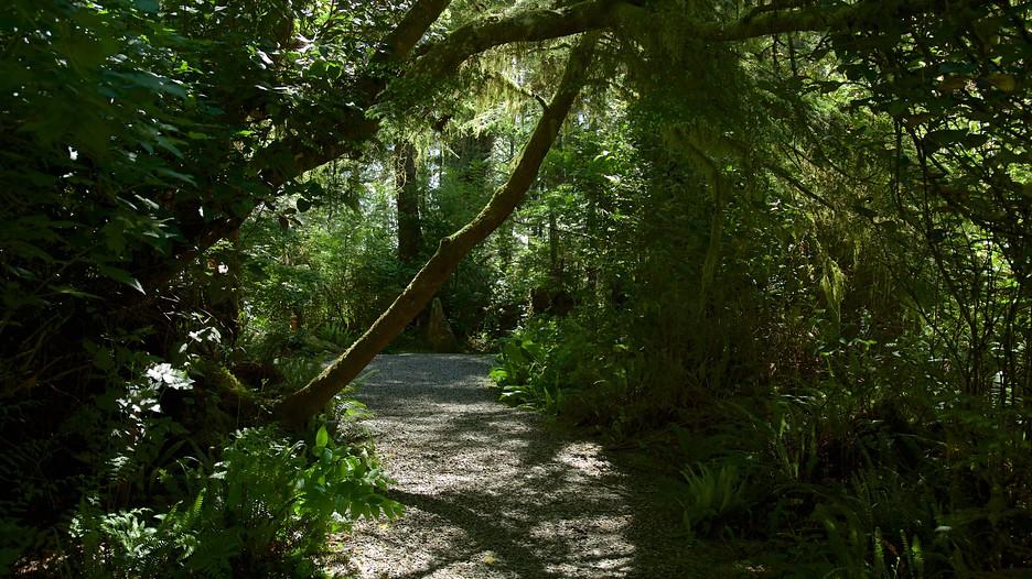 Tofino Botanical Gardens In Tofino British Columbia Expedia