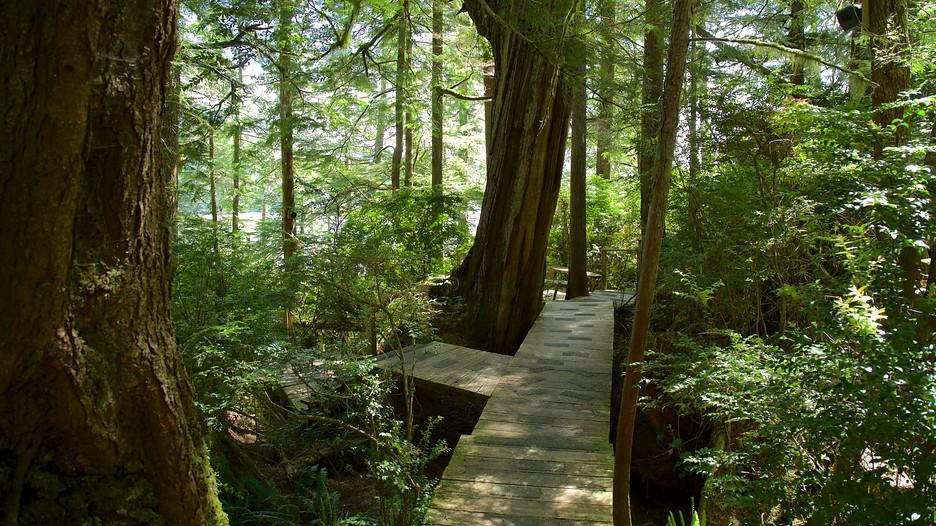 Jardins Botaniques De Tofino D 233 Couvrez Ile De Vancouver Avec Expedia Fr