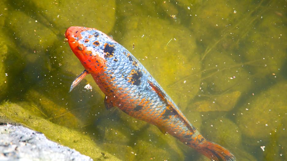 Kasugai gardens in kelowna british columbia expedia for Koi fish pond kelowna