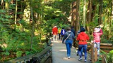 Capilano Suspension Bridge - Vancouver - Tourism Media
