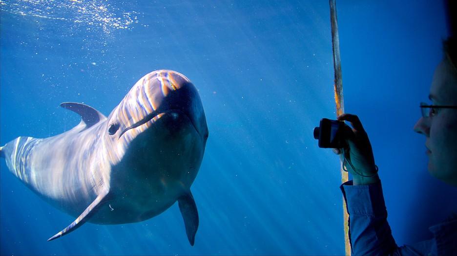 Vancouver Aquarium In Vancouver British Columbia Expedia Ca