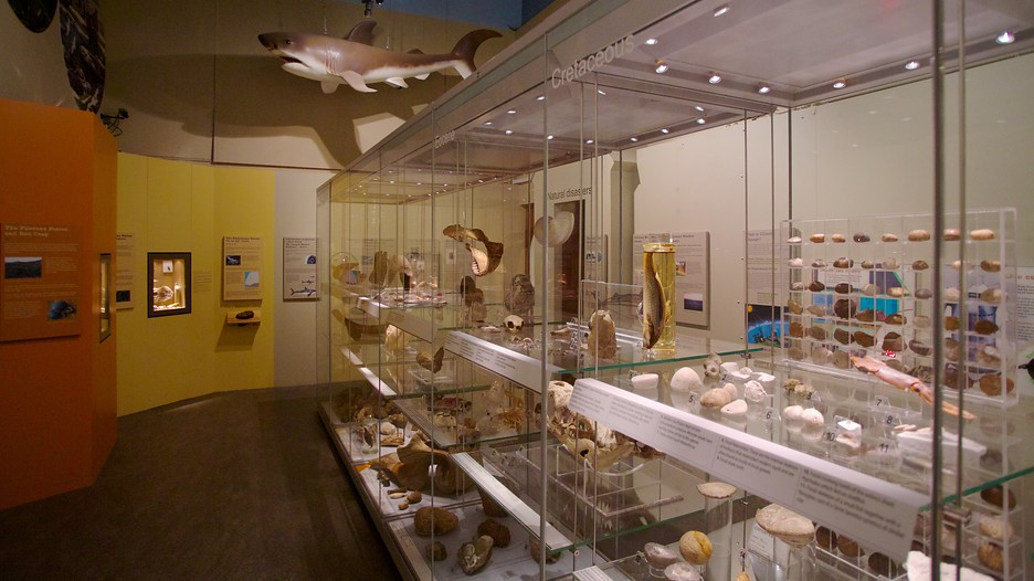 Colchester Natural History Museum Colchester