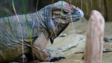 Colchester Zoo - Colchester - Tourism Media