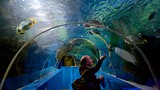 Blue Reef Aquarium - Hastings - Tourism Media