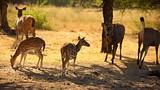 Ranthambore National Park - India - Tourism Media