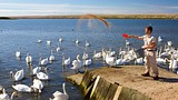 Abbotsbury Swannery - Weymouth - Tourism Media