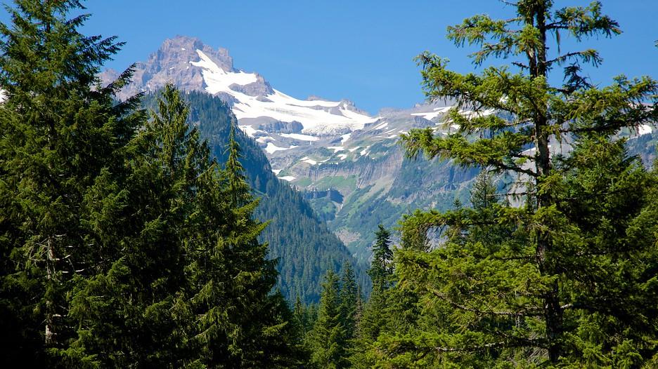 Mount Rainier National Park in Ashford, Washington ...