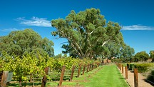Jacob's Creek Vineyards - Adelaide