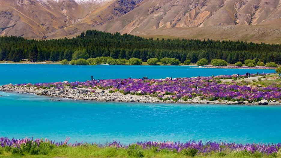 Lake Tekapo Hotels