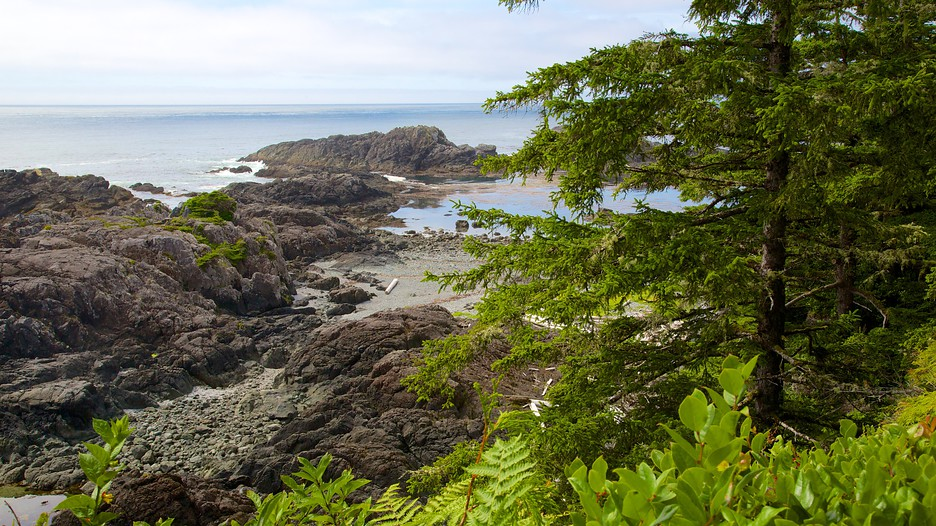 Pacific Rim National Park Reserve In Ucluelet British