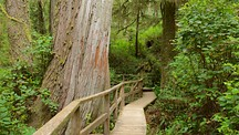 Rainforest Trail - Ucluelet