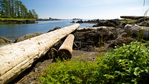 Ucluelet Big Beach - Ucluelet