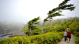 Wild Pacific Trail - Ucluelet - Tourism Media