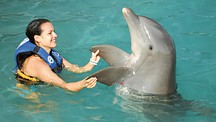 Dolphin Discovery - Cancún (et environs)