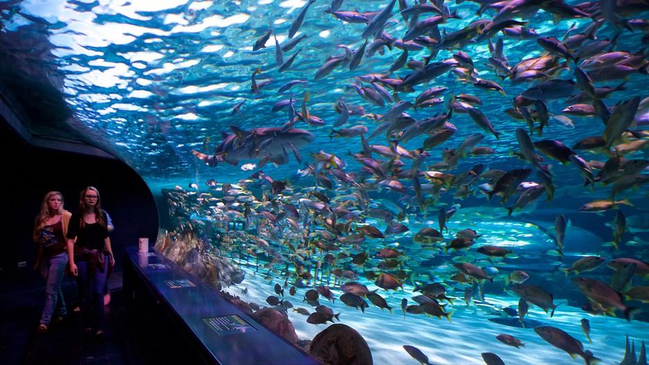 Ripley 39 S Aquarium Myrtle Beach South Carolina