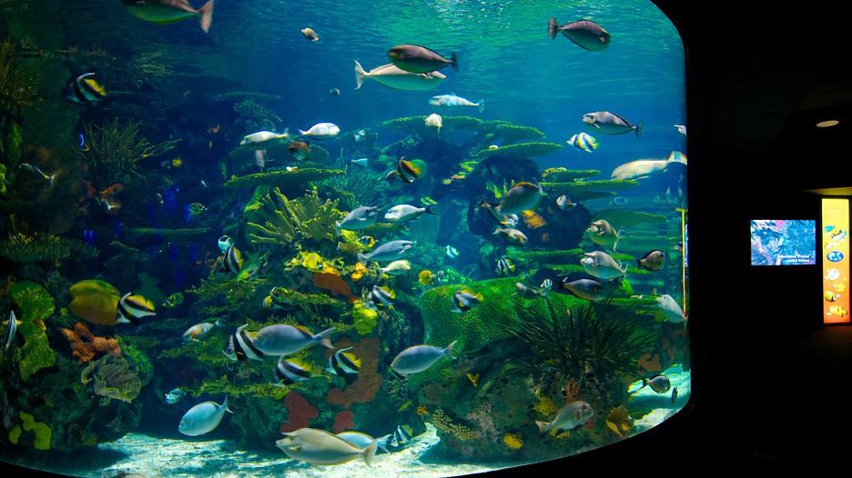 Ripley 39 S Aquarium Myrtle Beach