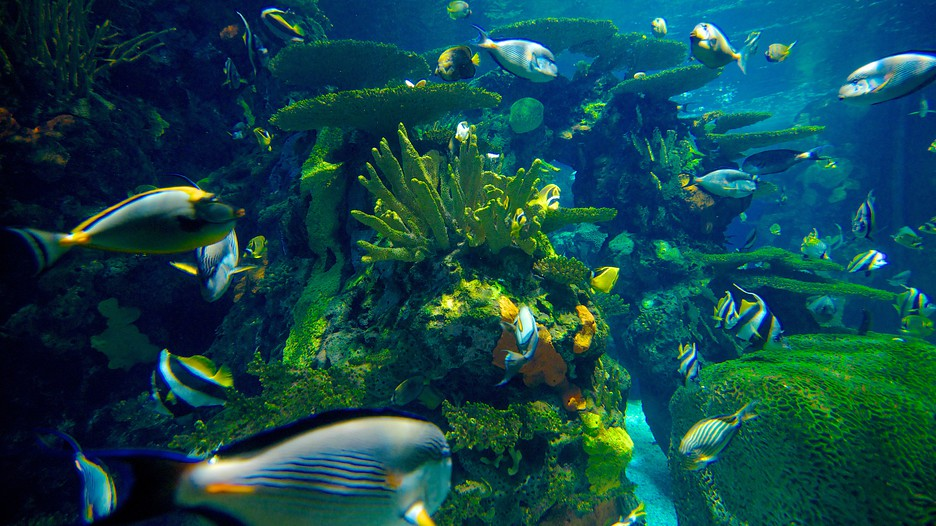 Ripley S Aquarium In Myrtle Beach South Carolina Expedia Ca