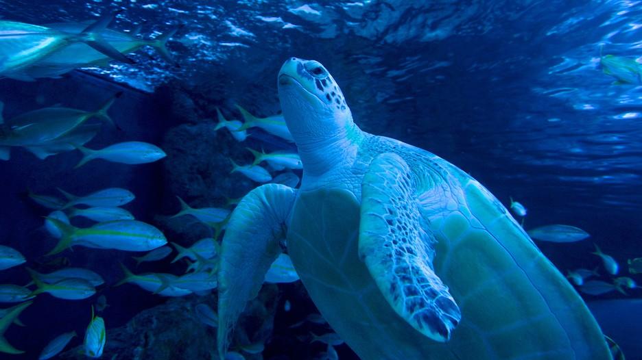 Ripley S Aquarium In Myrtle Beach South Carolina Expedia Ca