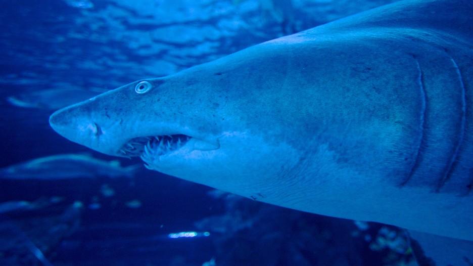 Ripley's Aquarium in Myrtle Beach, South Carolina | Expedia.ca