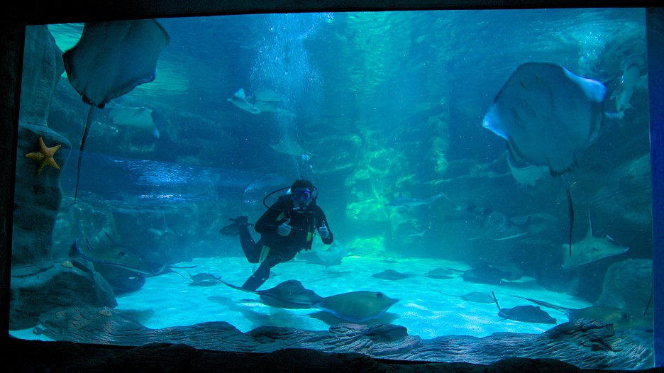 Hotels In Myrtle Beach Sc >> Ripley's Aquarium in Myrtle Beach, South Carolina   Expedia