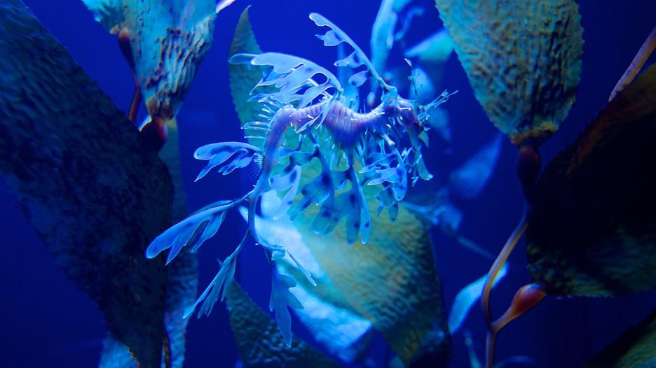 Ripley S Aquarium In Myrtle Beach South Carolina Expedia