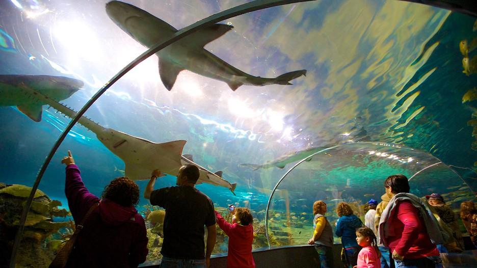 Ripleys Aquarium of the Smokies in Gatlinburg Tennessee – Gatlinburg Tourist Attractions Map