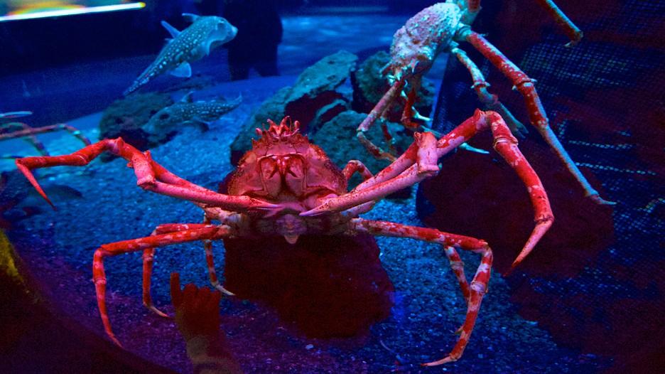 Ripley's Aquarium of the Smokies in Gatlinburg, Tennessee ...