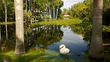 Bonnet House Museum and Gardens - Fort Lauderdale - Tourism Media