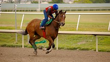 Gulfstream Park Racing and Casino - Fort Lauderdale
