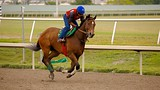 Gulfstream Park Racing and Casino - Fort Lauderdale - Tourism Media