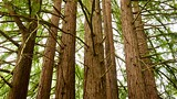 Redwood Regional Park - Oakland - Tourism Media