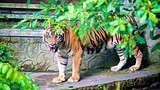 Gembira Loka Zoo - Central Java - Tourism Media