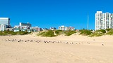 King's Beach - Port Elizabeth - Tourism Media