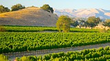 Santa Barbara Wine Country - 加州 - Tourism Media