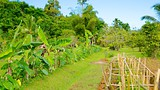 Showing item 27 of 36. Fiji Spice Garden - Fiji - Tourism Media