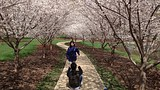 University of Illinois Arboretum - シャンペーン (およびその周辺地域) - Visit Champaign County