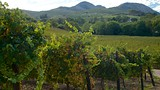 Laborie Winery - Paarl - Tourism Media
